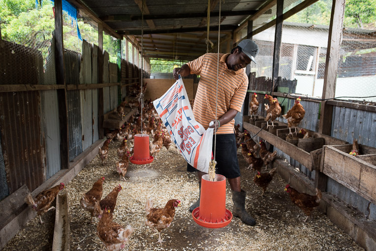 Vincent has been a poultry farmer on Dominica for about 18 years.