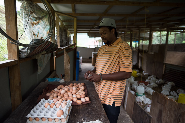 Samaritan's Purse helped replace Vincent Younis' chickens and restocked his feed.