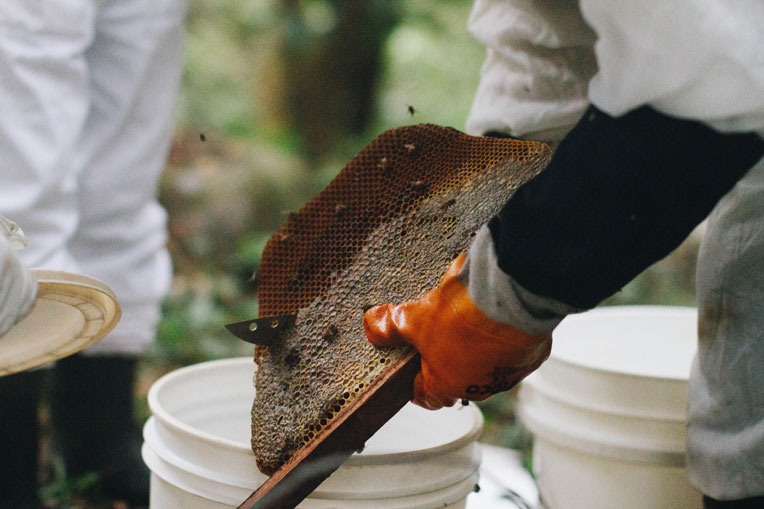 Proceeds from the honey collected from the beehives helps beekeepers  support their families.